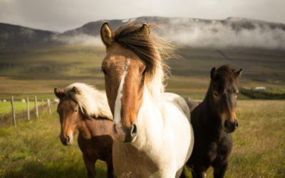 Horseback Riding In The Serrania de Ronda