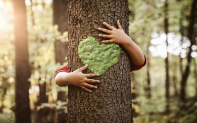 Biophilia – How We Connect With Nature