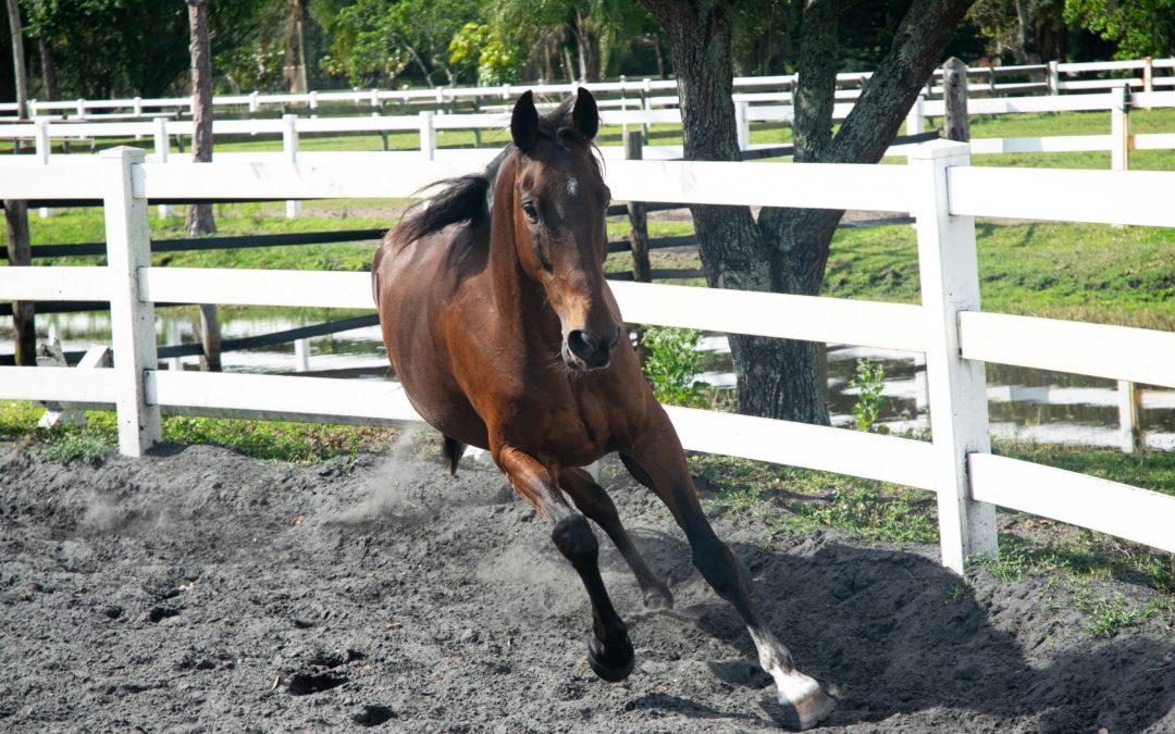 Cuidados básicos y esenciales para tu caballo