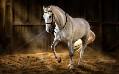 The Purebred Spanish Horse